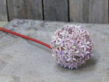 "Chic Antique ""Allium"" Lyng"